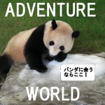パンダは上野より白浜!「アドベンチャーワールド」見どころ4つ
