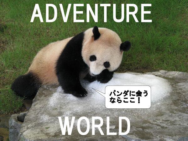 パンダは上野より白浜!「アドベンチャーワールド」見どころ4 ...