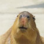 温泉だけじゃない!草津熱帯圏はカピバラやサルとふれあえる動物園