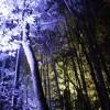 嵐山ライトアップ!冬の京都観光はイルミネーションより花灯路へ