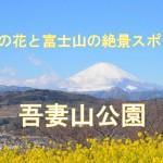 神奈川県「吾妻山公園」は1月が旬!菜の花と富士山が絶景でした