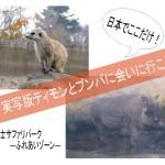 実写版ティモンとプンバに会える!富士サファリのふれあいゾーン