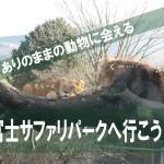 ライオンが自由すぎる!「富士サファリパーク」を車で探検しよう