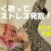 安く歌ってストレス発散☆吉祥寺にあるカラオケ店の料金比較!
