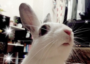 rabbit-caution 1