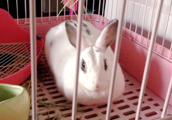 rabbit-caution5