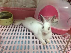 rabbit-starter2