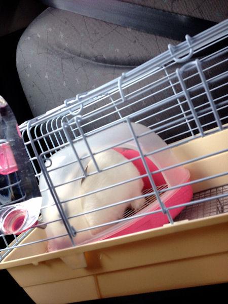 rabbit-car3