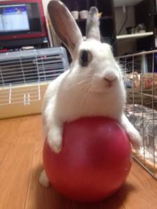 rabbit-heyanpo3