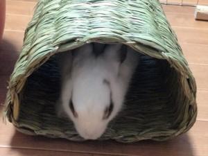 rabbit-heyanpo4