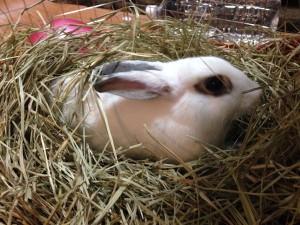 rabbit-heyanpo5