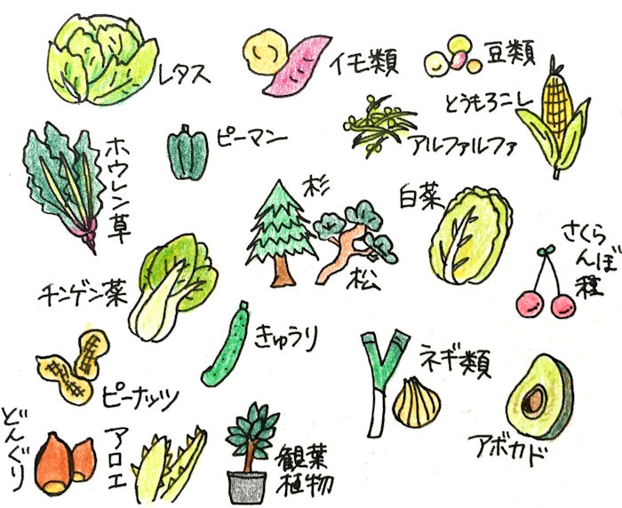 rabbit-vegetables3