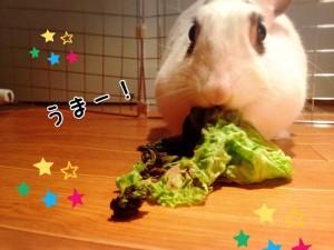 rabbit-vegetables5