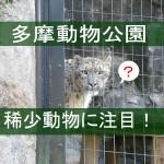 稀少動物を見逃すな!多摩動物公園の珍しい生き物7種類