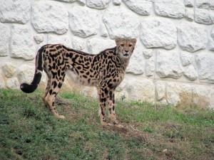 zoo-tama3