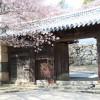 愛媛県松山城でお花見!天守閣と桜のコラボ&夜桜ライトアップ