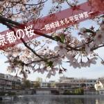 十石船に乗るなら事前予約を!京都岡崎疎水&平安神宮の桜