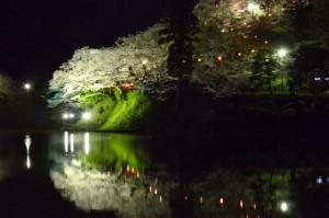 cherry-blossom-okazaki4