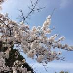 桜の名所を歩いて巡る!元京都人が考えるお花見散歩コース8選