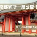 年に2回しかない京都御所一般公開!珍しい品種の桜も必見!