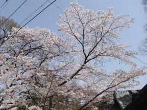 kyoto-bbq3