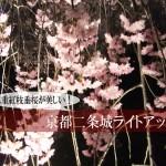 八重紅枝垂桜が美しい!2016年京都二条城の夜桜ライトアップ