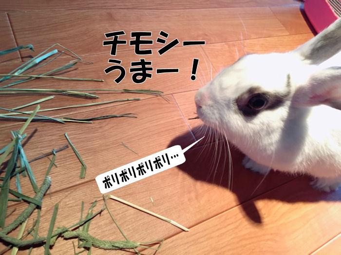rabbit-grass1