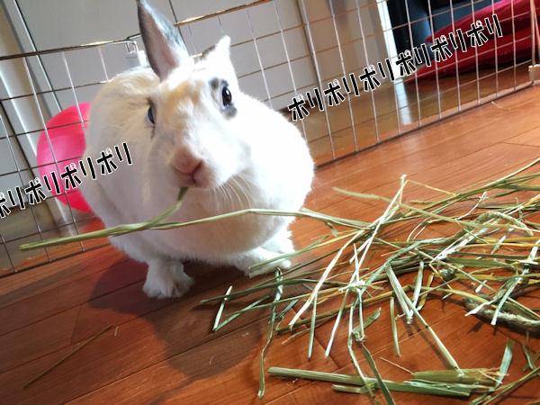 rabbit-grass2