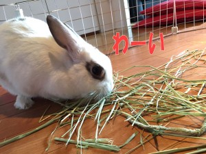rabbit-grass4