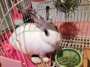 rabbit-toilet2