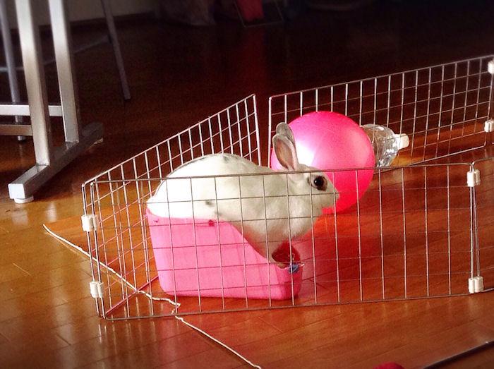 rabbit-toilet3