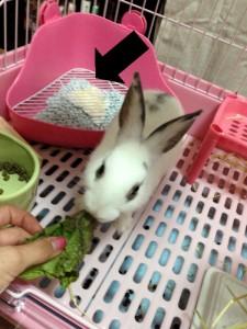rabbit-toilet4