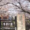 大混雑の京都市バスを攻略!桜の名所「哲学の道」へ行く方法
