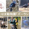 鳥好き必見のバードショーあり!よこはま動物園「ズーラシア」