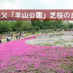 羊山公園「芝桜の丘」&秩父神社!訪れるなら春がおすすめ!