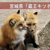 衝撃の放し飼い!宮城「蔵王キツネ村」でエサやり&抱っこ体験!