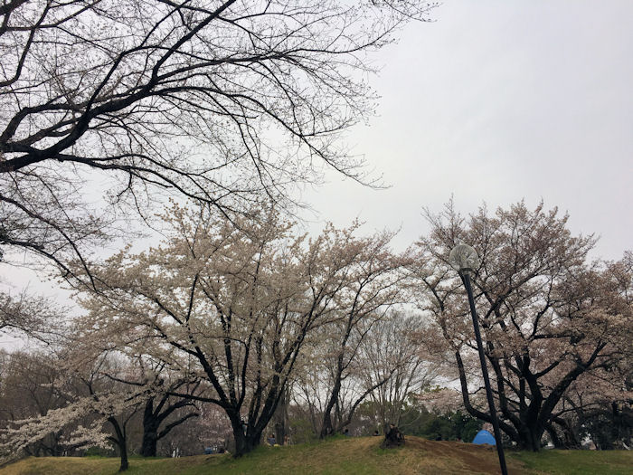 park-tokorozawa3