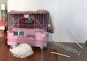 rabbit-feeling1