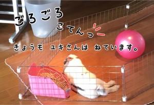 rabbit-feeling2