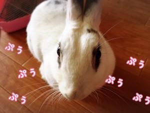 rabbit-feeling3