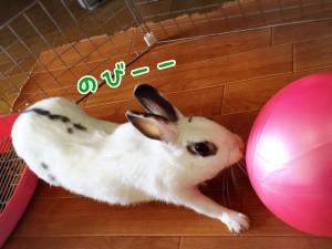 rabbit-feeling4