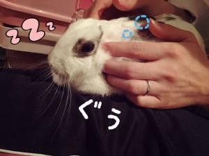 rabbit-feeling6