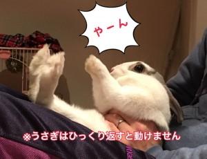 rabbit-feeling7