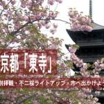 京都「東寺」の特別拝観・不二桜ライトアップ・市へ出かけよう!