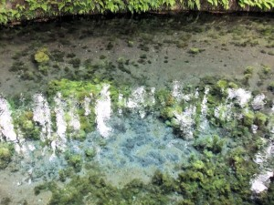 water-spot1