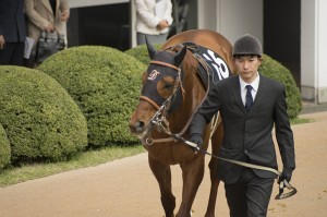 horse-racing2