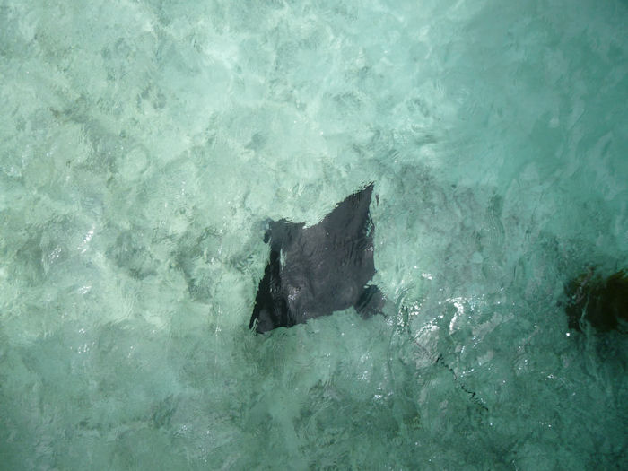 maldives-fish1