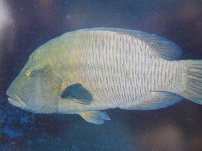 maldives-fish10