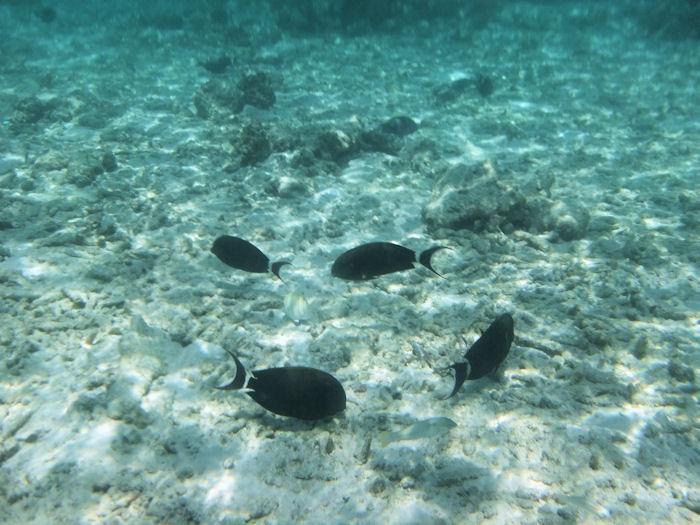 maldives-fish12
