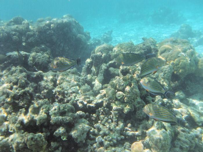 maldives-fish13